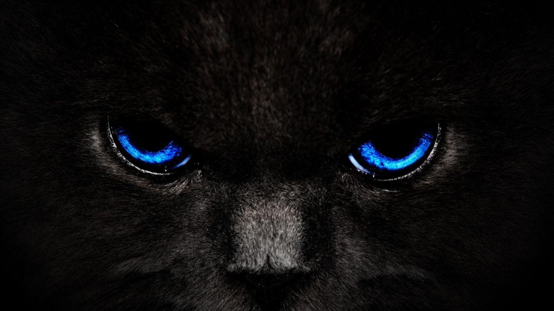 Black Cat Animals Black Blue Eyes Cat Hd Animals 86