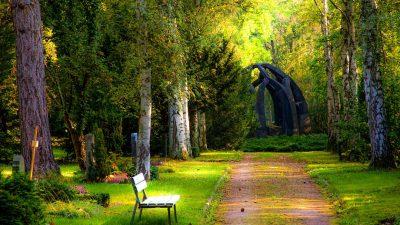 Backgrounds, Beautiful, Grass, Green, Hd, Nature, Widescreen