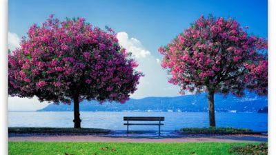 Blue, Image, Natural, Nice, Sky, Tree