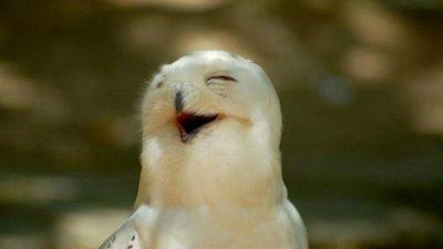 Bird, Funny, Hd, Image