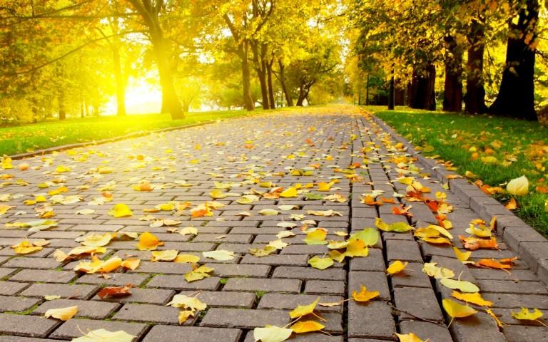 HD Autumn Image