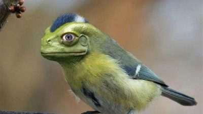 Bird, Frog, Funny, Sparrow