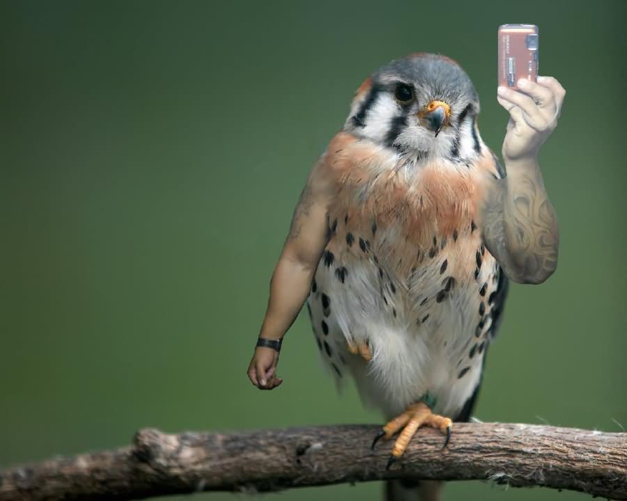 Funny Bird Photo