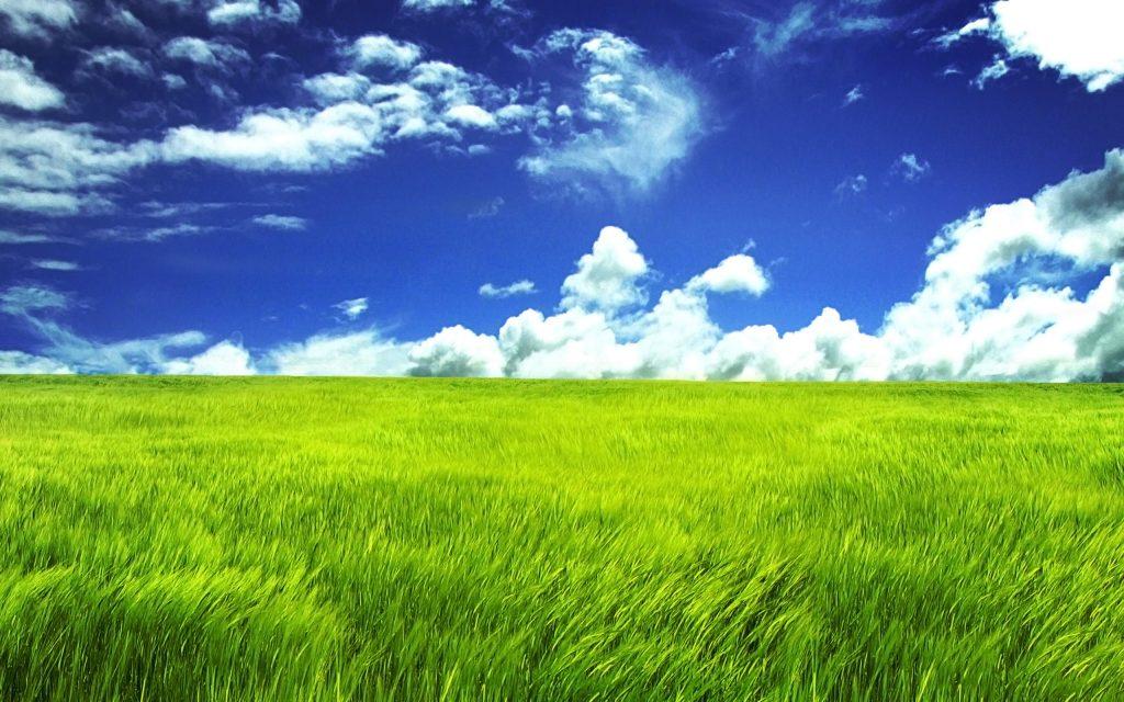 Green Field Image
