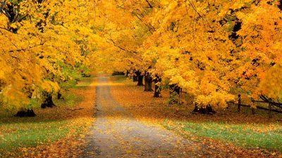 Autumn, Hd, Natural, Tree, Yellow
