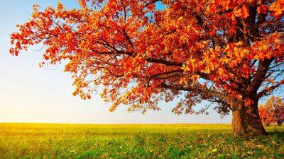 Field, Green, Orange, Tree, Wallpaper