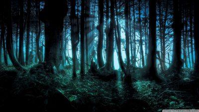 1080p, Hd, Nature, Wallpaper, Widescreen