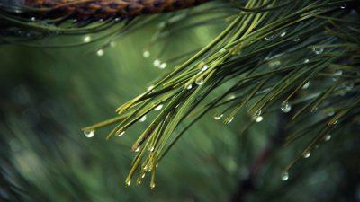 Beautiful, Drop, Green, Image, Water