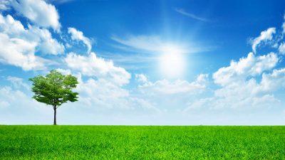 Blue, Clouds, Image, Sky, Tree, White