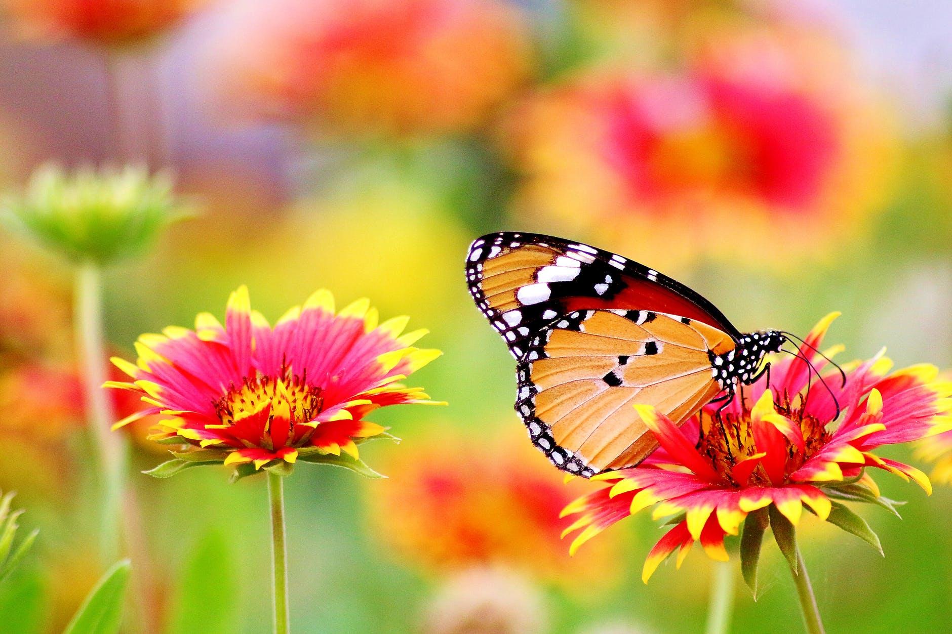 Flower Wallpapers 4k Butterfly Colorful Flower Hd Flowers 1805