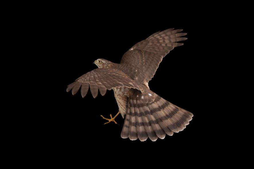 Hawk Backgrounds