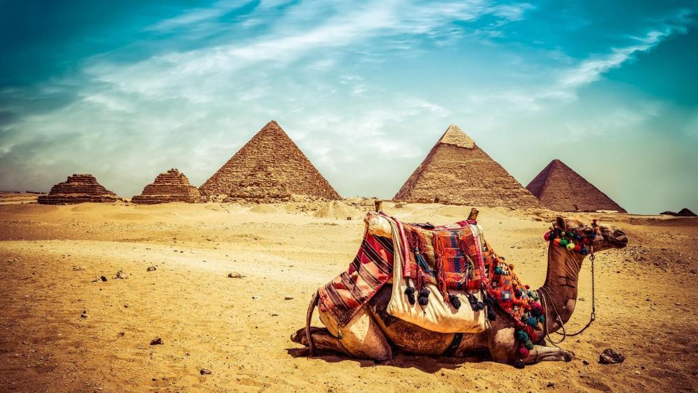Egypt Wallpaper Camel Egypt Natural Pyramids