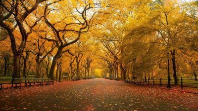 4k, Autumn, Desktop, Hd, Trees, Yellow