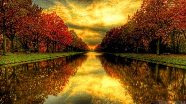 Beautiful, Hd, Natural, Tree, Wallpaper