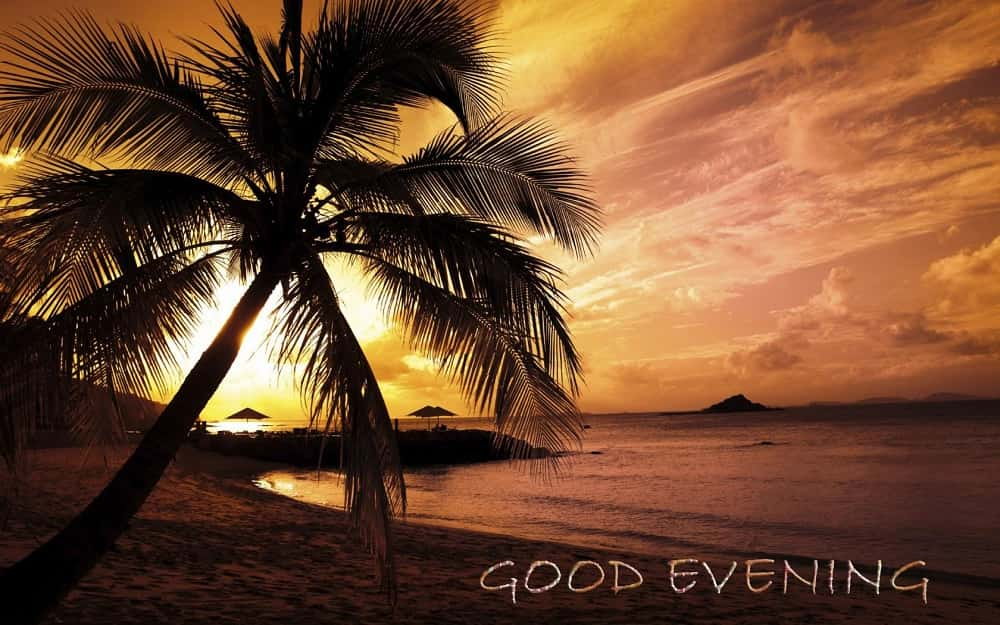 Clouds, Evening, Natural, Palm, Sunset