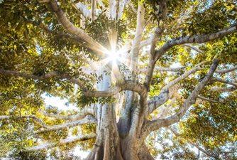 Green, Image, Natural, Tree