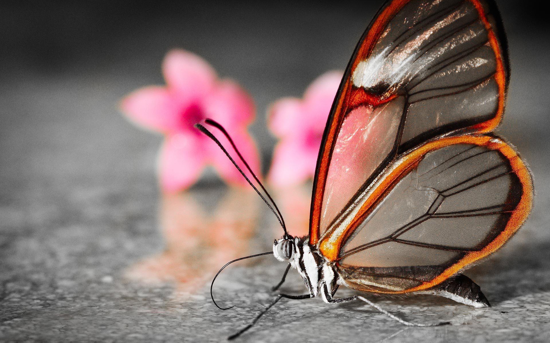 Butterfly, Digital, Flower, Latest, Wallpaper