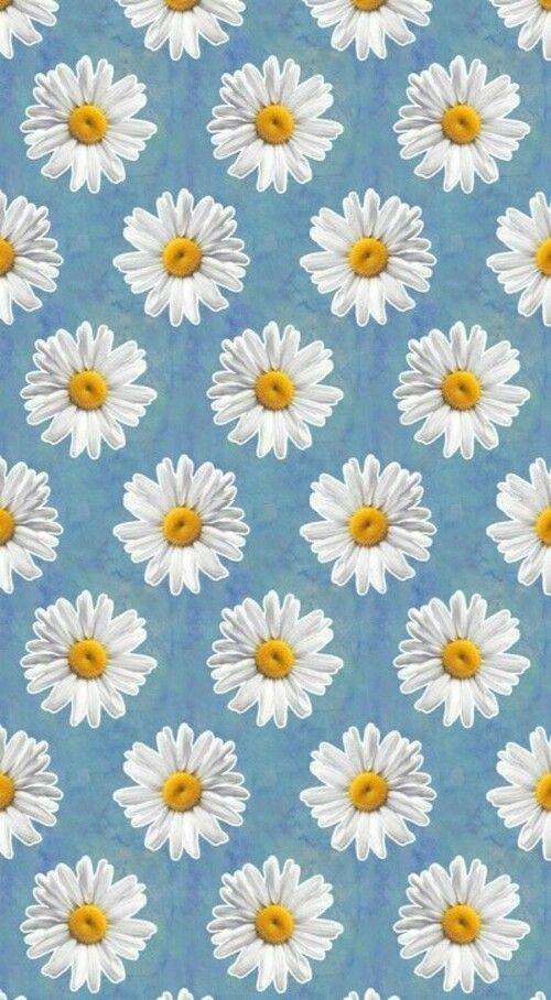 Daisy Wallpaper Beautiful Flower Hd Wallpaper White