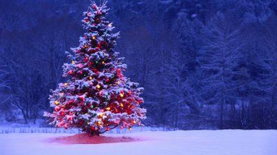 Blue, Christmas, Hd, Tree, Wallpaper