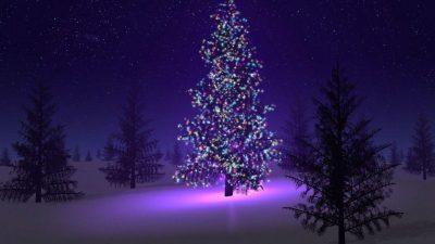 Background, Christmas, Hd, Purple, Tree