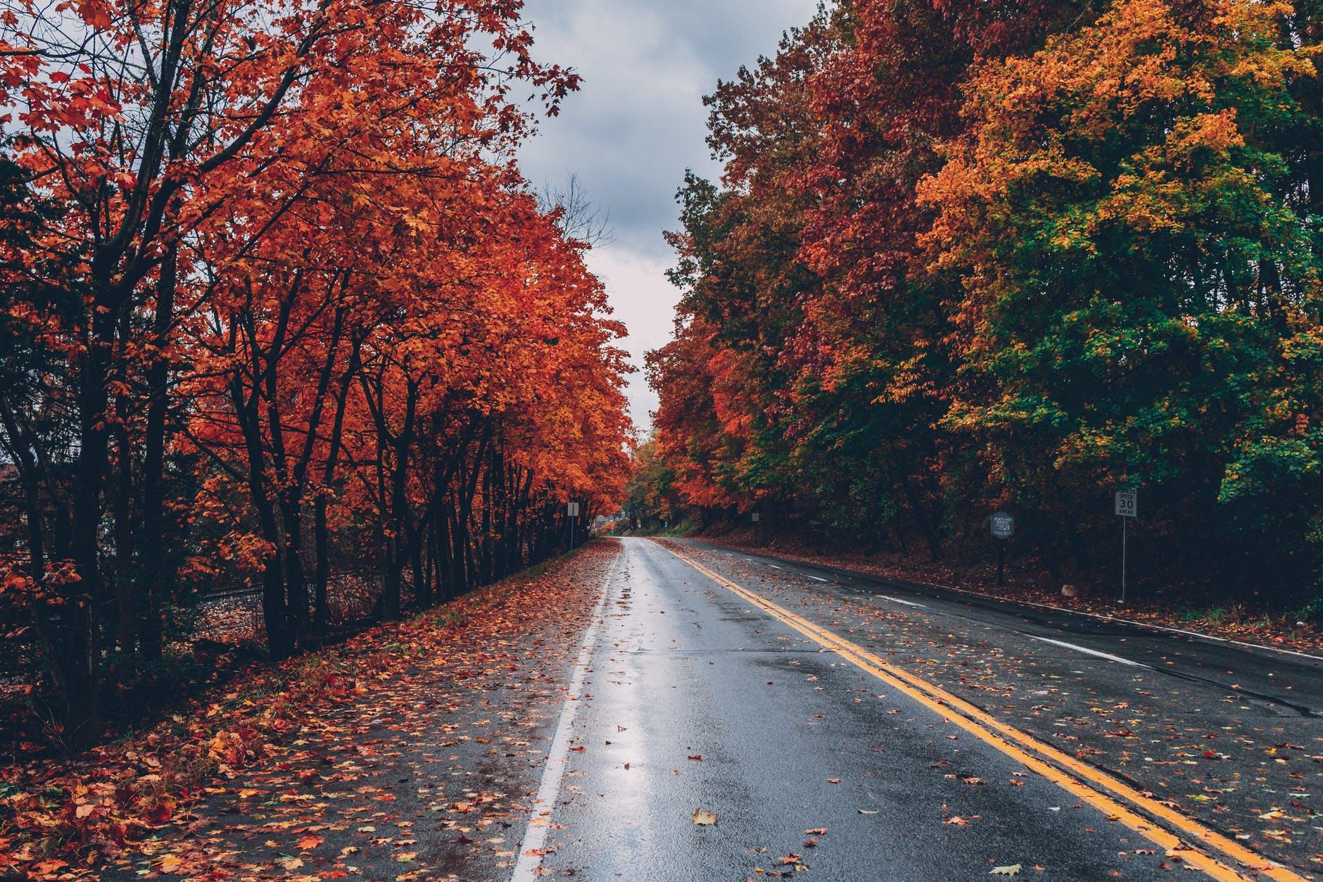 26+ Nature Background Hd Fall Pics