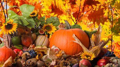 Sunflower, Thanksgiving, Wallpaper, Yellow