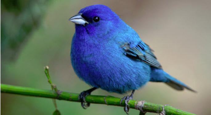 Blue Bird background