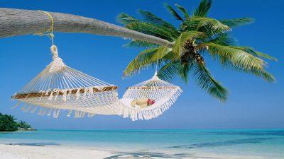 Beach, Hd, Nature, Palm Tree, Wallpaper