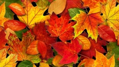 Autumn, Beautiful, Colorful, Image, Leaves, Natural