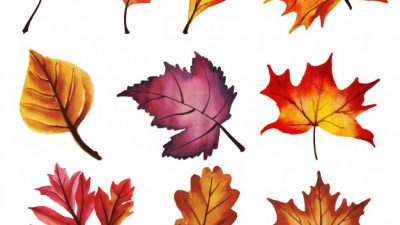 Autumn, Beautiful, Leaves, Natural, Wallpaper