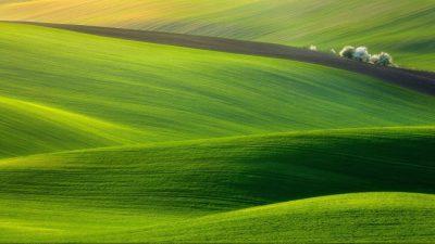 Background, Grass, Green, Natural