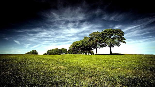 Greenery Photo