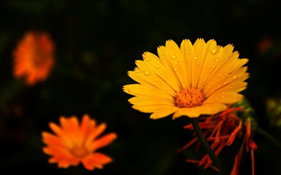 HD Flower Background