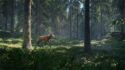 Beautiful, Forest, Natural, Wallpaper, Wild