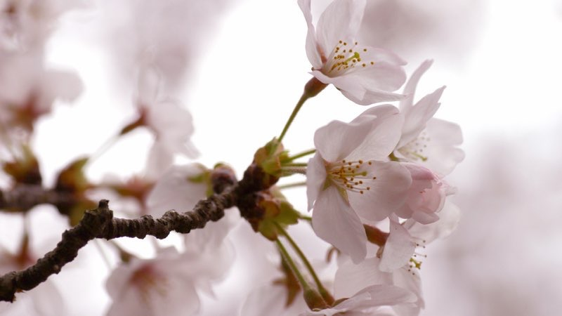 HD Flower Photo