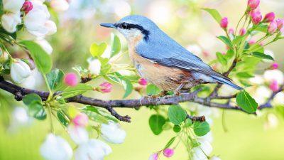 Bird, Image