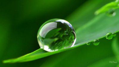 Dew, Image