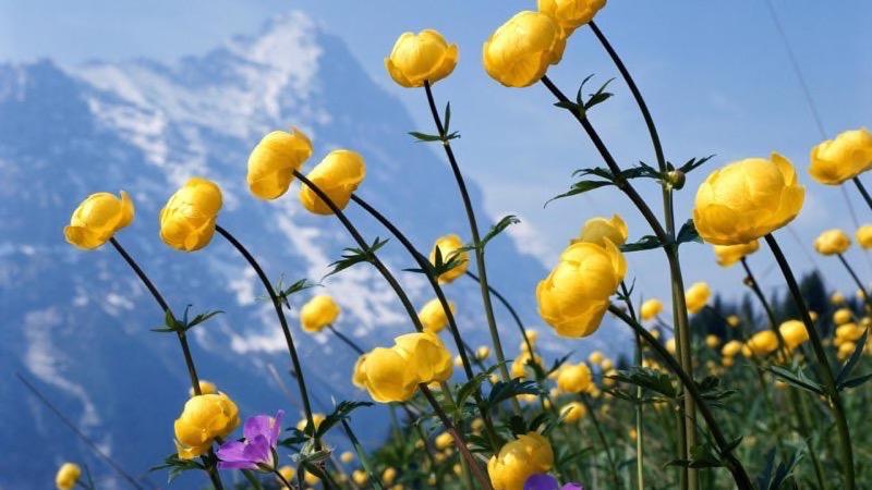 HD Flower Image