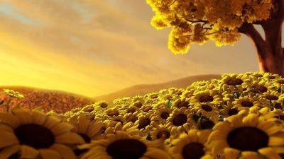 Beautiful, Flower, Hd, Natural, Photo, Sundown