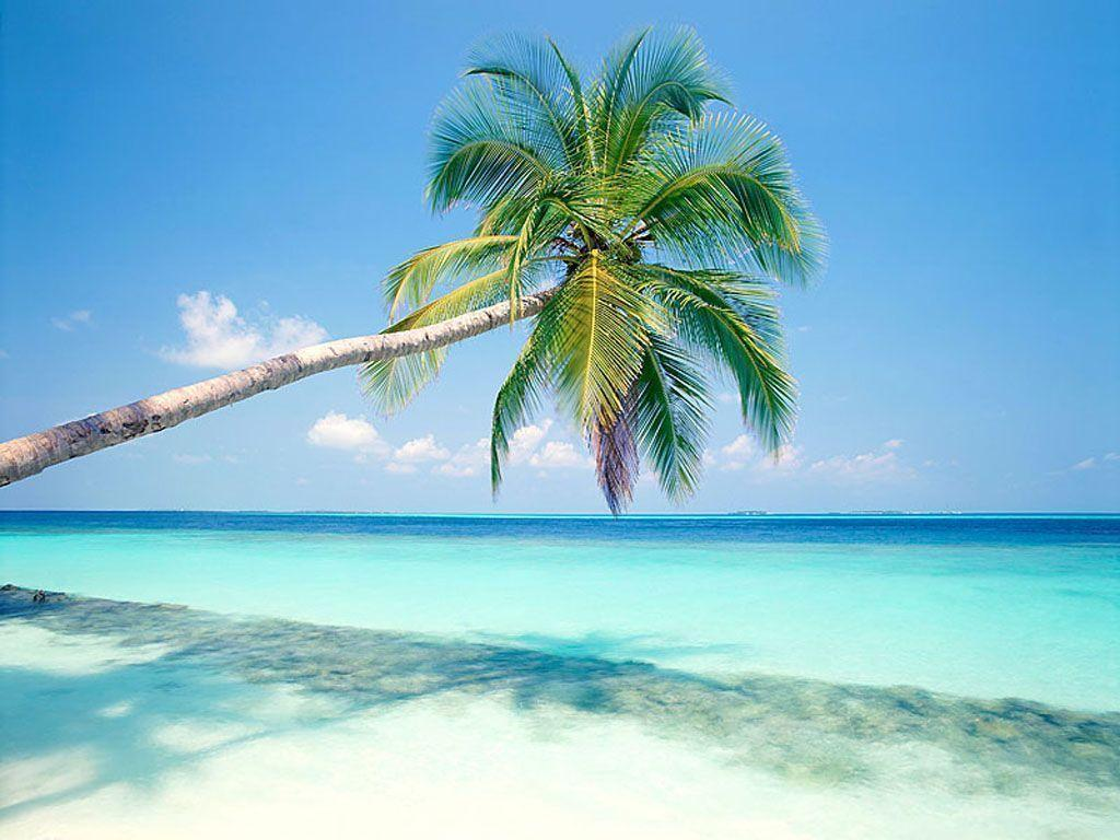 Beach Palm Tree Wallpaper