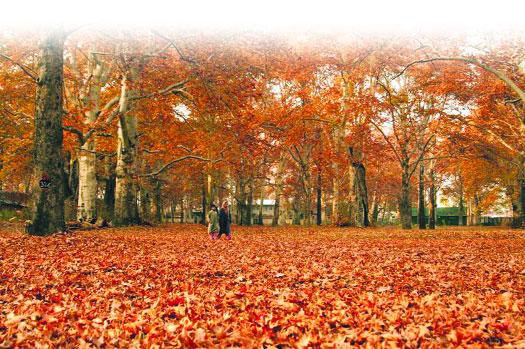 Autumn Season Picture
