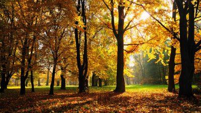 Beautiful, Nature, Season, Wallpaper