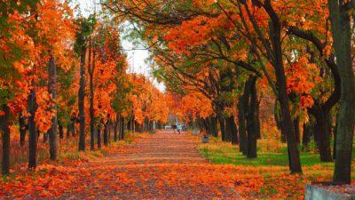 Autumn, Nature, Photo, Season, Widescreen