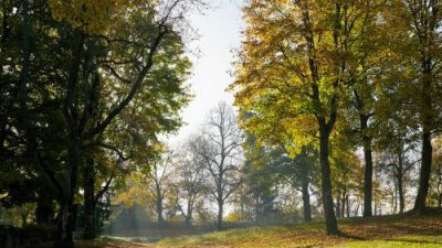 Autumn, Free, Image, Natural, Season