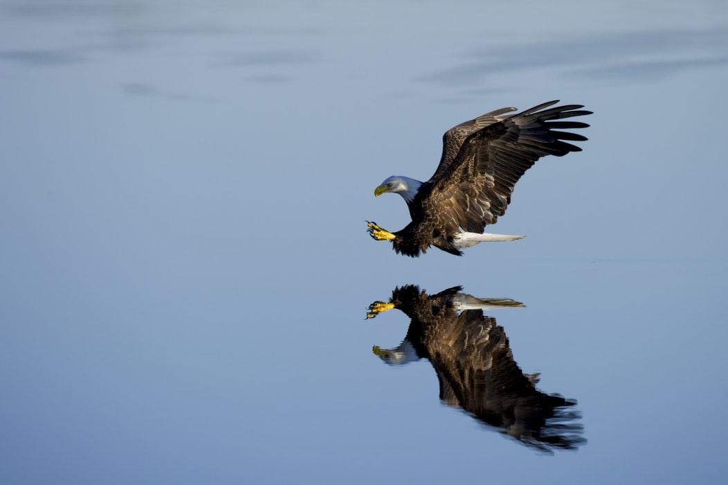 Flying Eagle Background