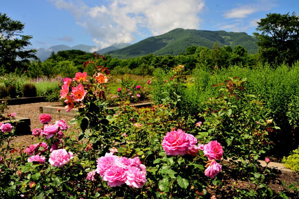 Beautiful Garden Picture