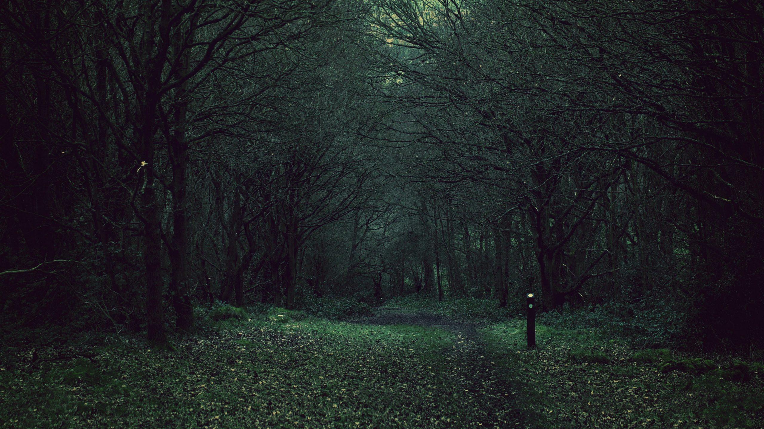 Dark Forest Background Background Dark Forest Hd Widescreen