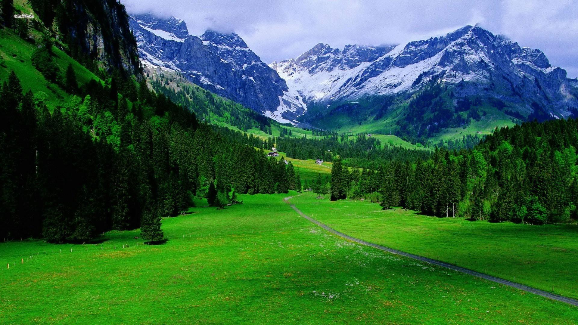 Natural Scene Photo