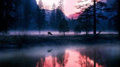Desktop, Image, Mountain, Stunning, Tree