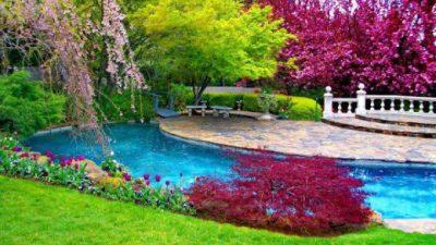 Best, Colorful, Flower, Natural, Scene, Wallpaper